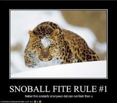 cats, big cat, funny pictures, snowbal fight, snowball
