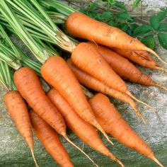 Long lasting food: Carrots
