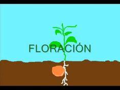 ciclo de vida de una planta