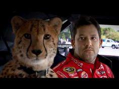 Tony Stewart Cheetah Commercial