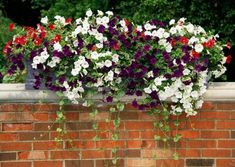 Pretty petunias in red white and blue planted in a container~