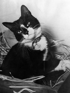 Simon, a cat who won a Dickin Medal. He was the ships cat aboard HMS Amythest during the Yangtze incident.