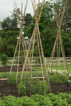 Love this trellis for beans...