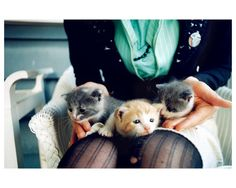 {lap kittens!} by laina briedis