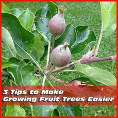 3 Tips to Make Growing Fruit Trees Easier
