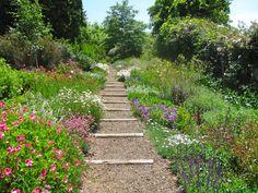 english panorama lawn flora