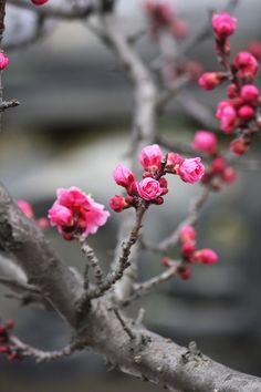 #Blossoms #Spring