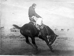 Greatest Bucking Horse of all time.  Had you ever wondered who the horse is on Wyoming license plates?  His name was Steamboat! He had his windpipe damaged and wheezed like a steamboat whistle while bucking all riders off.