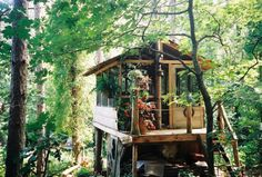Tree house with plant collections
