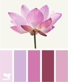 lotus pink design seeds hues tones shades  color palette, color inspiration cards #hues #tones #shades #colorpalette #colorinspiration #designseeds