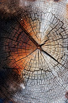 #element #earth #tree #rings