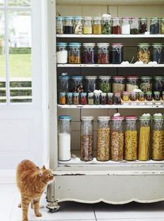 urban pantry - idea. Actually see if you are about to run out of something before the box is empty!! cat, organizations, food, pantries, dream pantry, organized pantry, pantry organization, kitchen, jars
