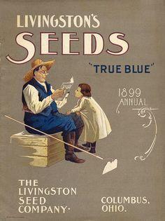 Heirloom vegetable seed catalogs      Livingston's 1899