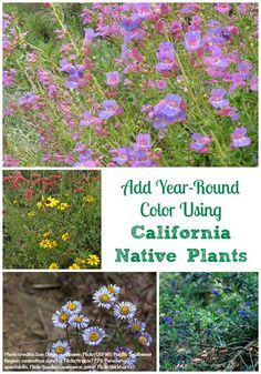 """""""Add Year-Round Color Using California Native Plants"""""""