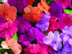 A Few Alternatives to Impatiens — The Gardenist