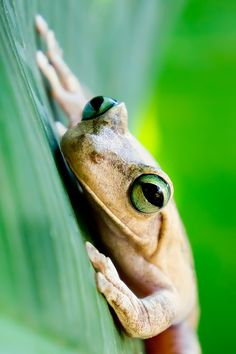 'Frog'...by photographer Luis Padilla
