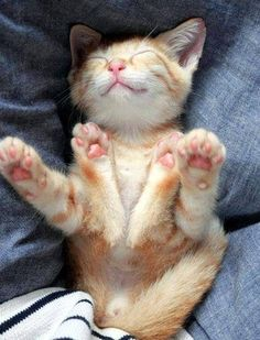 I will not look at kitten pictures! I will not look at kitten pictures. I will spend my life looking at kitten pictures if I look at even one.