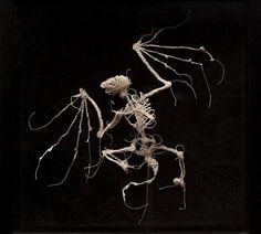 Incredible curious creatures of string andglue