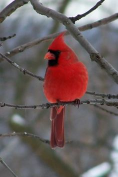 Wild bird watching.