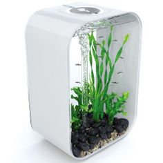 I want this for the desk at my office.   This is the aquarium that replicates the brightness and progression of sunlight, providing fish with a more natural, healthier habitat