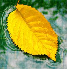 yellow leave