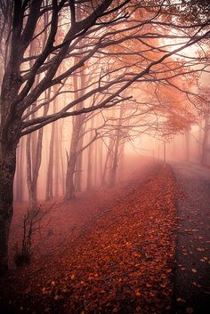 Autumn mysterious in Camaldoli, Tuscany, Italy