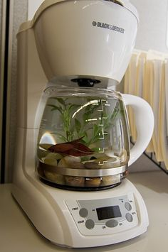 Coffee pot aquarium.