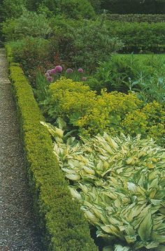 garden planters, hedges, outdoor, side yards, front yards