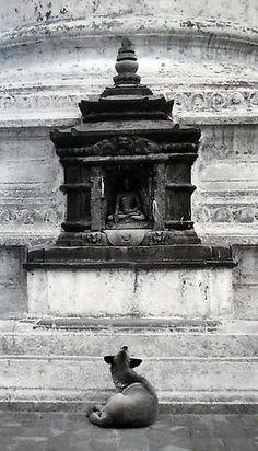 artists, anim, far away, silver, pentti sammallahtilightbox, 1994, dog, prints, nepal