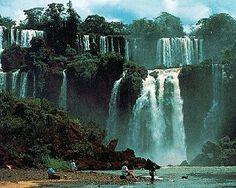 rainforest in brazil