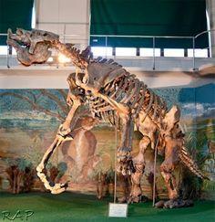 The fantastic Megatherium