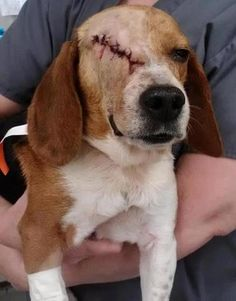 How can you justify animal testing when this is one of the results....and this is mild when compared to other testing - just too gruesome to look at.  Insure your purchases are NOT BEING TESTED ON POOR UNSUSPECTING ANIMALS. What happens to them is so far beyond cruel - it's unspeakable.