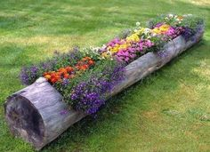 fallen tree too heavy to move? hollow it out and use as a planter!  genius idea!