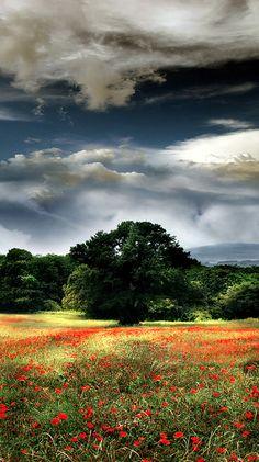 Poppy field in Sutri, Viterbo, Italy