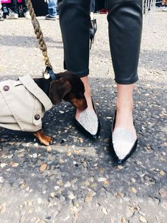 Sergio the Shoehunter spotted @Camtyox Wearing the Jimmy Choo GUILD flat at LFW