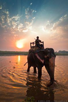 Elephant Safari, Chitwan National Park, Nepal >> Beautiful pin from @Jennifer Milsaps L Lynn