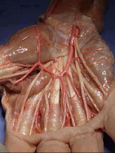 Medicine the human body, bodi, stuff, anatomi, hands, skin, palms, scienc, medic