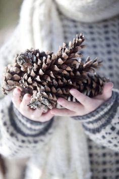 Pine cone love.