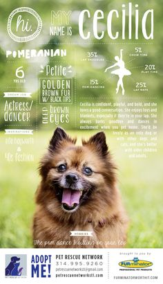 Hi. My name is Cecilia. I'm looking for my forever home. #pet #adoption #poster #dog #design #infographics