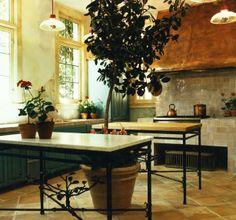 stove, kitchens, green walls, potted plants, copper, heel, indoor trees, hood, island