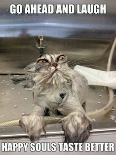 soul food, humorous quotes, funny pics, the face, funny cats, funni, funny photos, grumpy cats, bath time