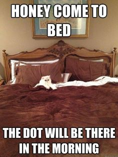 Submitted by: Unknown Tagged: workaholic , laser , Cats , funny Share on Facebook