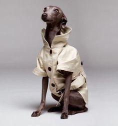 fashion weeks, dogs, elegant, jackets, fashion doggi, trench coats, para, animal, doggi style