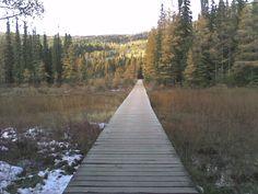 Boardwalk to Liard Hot Springs pools from the Alaska Highway, B.C.