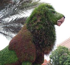 Topiary lion