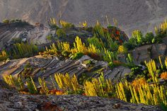 HUNZA ,PAKISTAN, via Flickr.