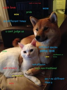Now that I have discovered shibes there is no going back