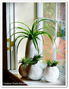 "Our Little Acre: "" 'Indoor Plant Décor' - It's Everywhere!"""