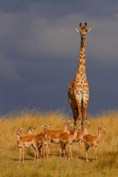 Wilderness of Africa