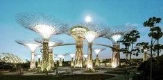 canopi, the bay, architectur festiv, bays, gardens, forest, architecture, light, singapore